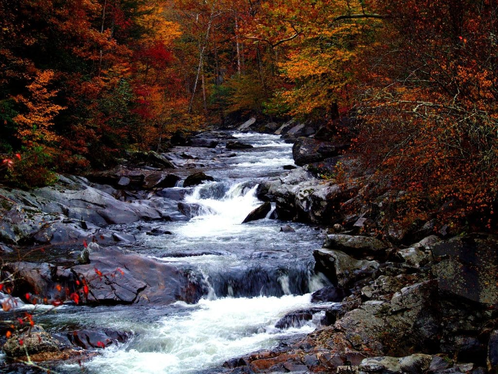 Picture of Stream in Fall for Camping Chair Post